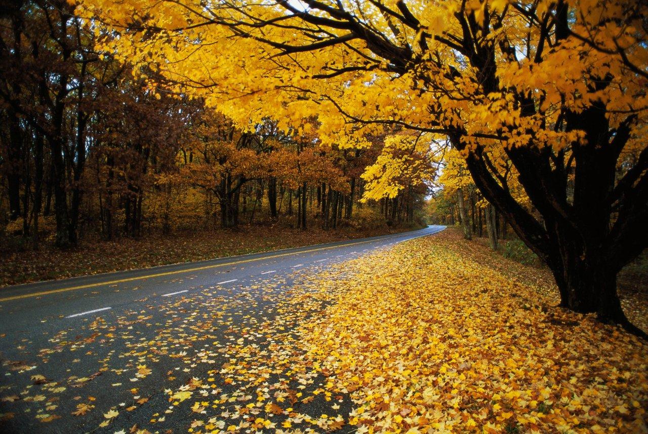 Осенняя дорога среди деревьев