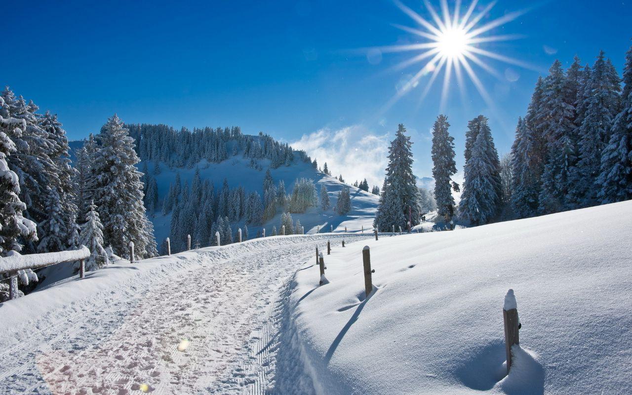 Зимняя дорога среди ёлок в горах